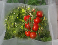 Contflex horizontal rouges2 tomatoes